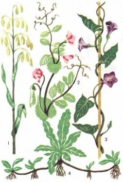 Цветы с ползучими стеблями
