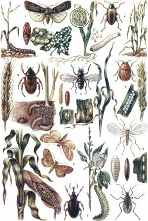 Реферат насекомые вредители сельскохозяйственных растений 4717